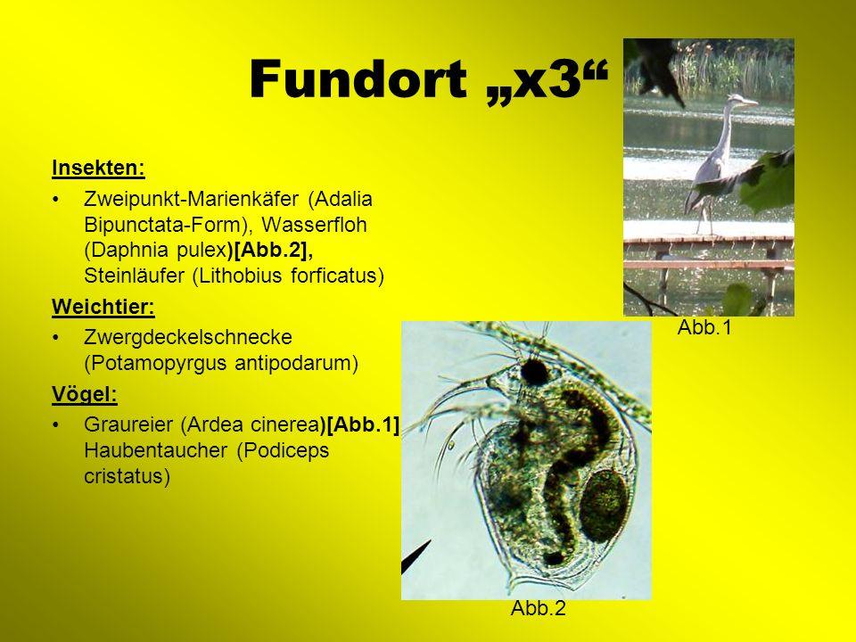 Fundort x4 Insekten: Feuerwanze (nachgucken), Reblaus (Viteus vitifolii), Siebenpunkt- Marienkäfer (Cocinella septempunctata), Schwarzgraue- Wegameise (Lasius niger), Kugelspinne (Theridiidae), Sackspinne (Clubiona terrestris), Laubheuschrecke (Tettigoniidae)[Abb.1], Sichelwanze (Himacerus miricoides)[Abb.2], Wasserspringschwanz (Podura auqatica) Krebstier: Amerikanischer Flusskrebs (Oronectes limosus) Vögel: Höckerschwan (Cygnus olor), Türkentaube (Streptopelia decaoctor), Ringeltaube (Columba palumbus), Nebelkrähe (Corvus corone cornix) Abb.2 Abb.1
