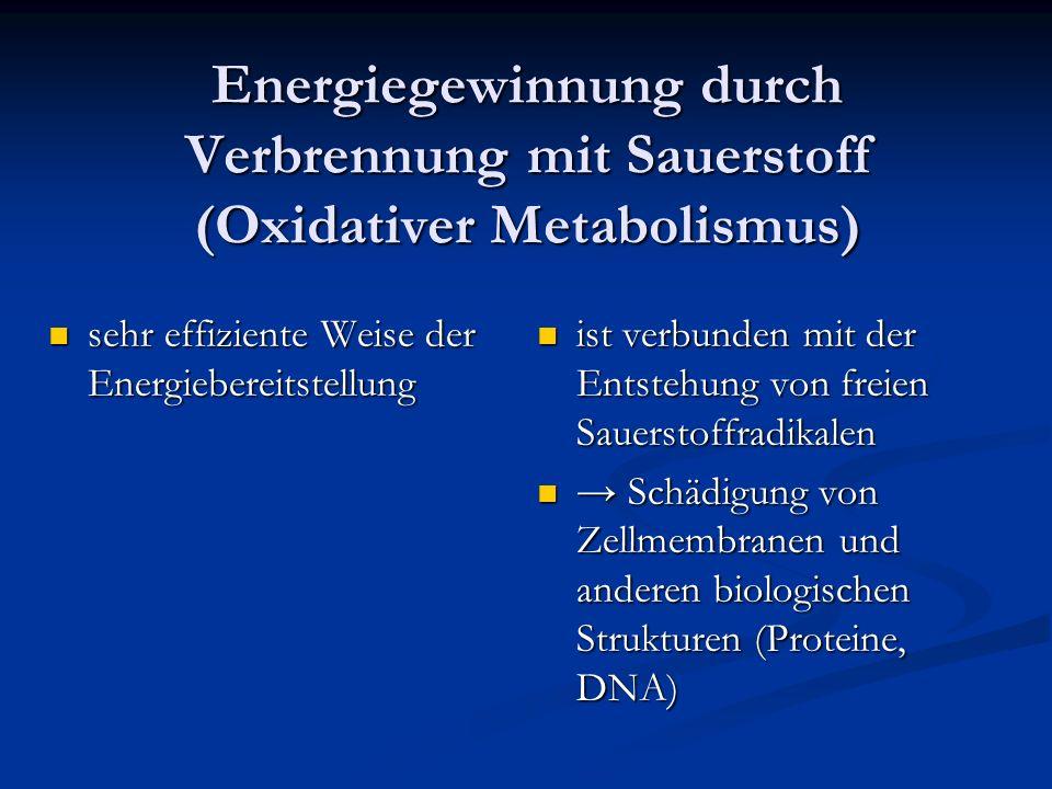 Energiegewinnung durch Verbrennung mit Sauerstoff (Oxidativer Metabolismus) sehr effiziente Weise der Energiebereitstellung sehr effiziente Weise der