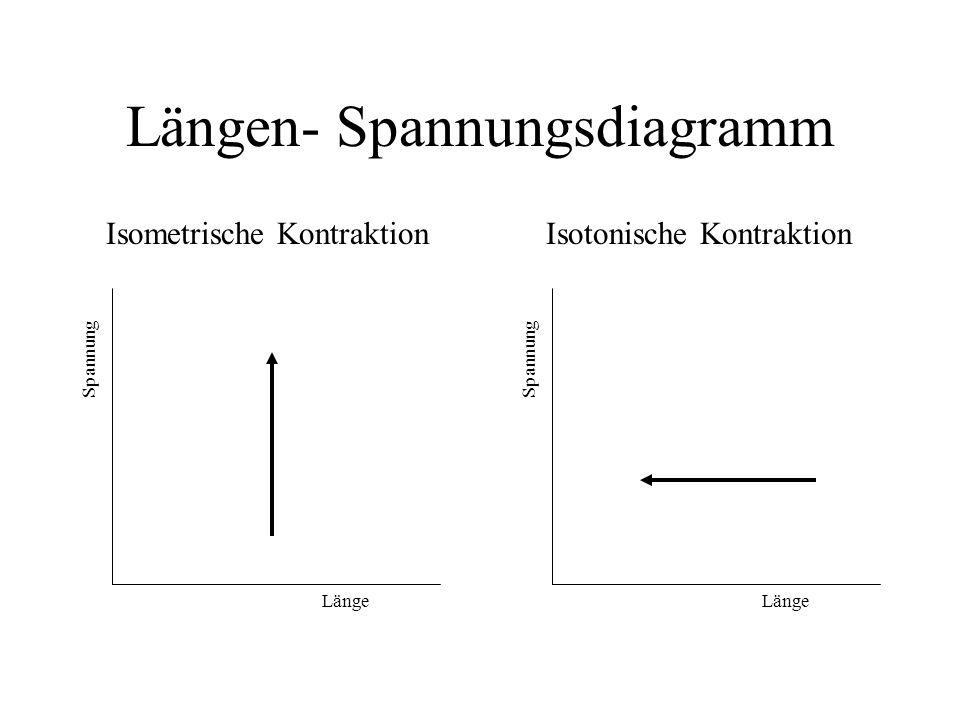 Längen- Spannungsdiagramm Isotonische Kontraktion Länge Spannung Isometrische Kontraktion Länge Spannung