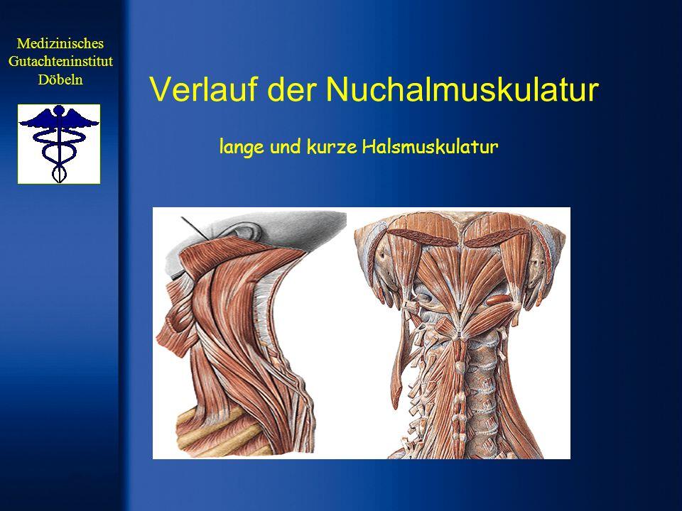 Verlauf der Nuchalmuskulatur lange und kurze Halsmuskulatur Medizinisches Gutachteninstitut Döbeln