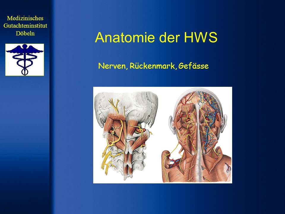 Halswirbelsäule Anatomie | Medizin Deutschland