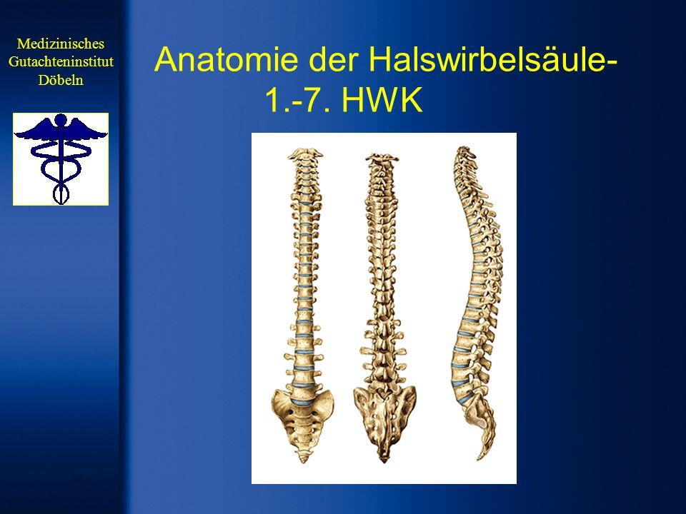 Anatomie 1.HWK (Atlas) Medizinisches Gutachteninstitut Döbeln