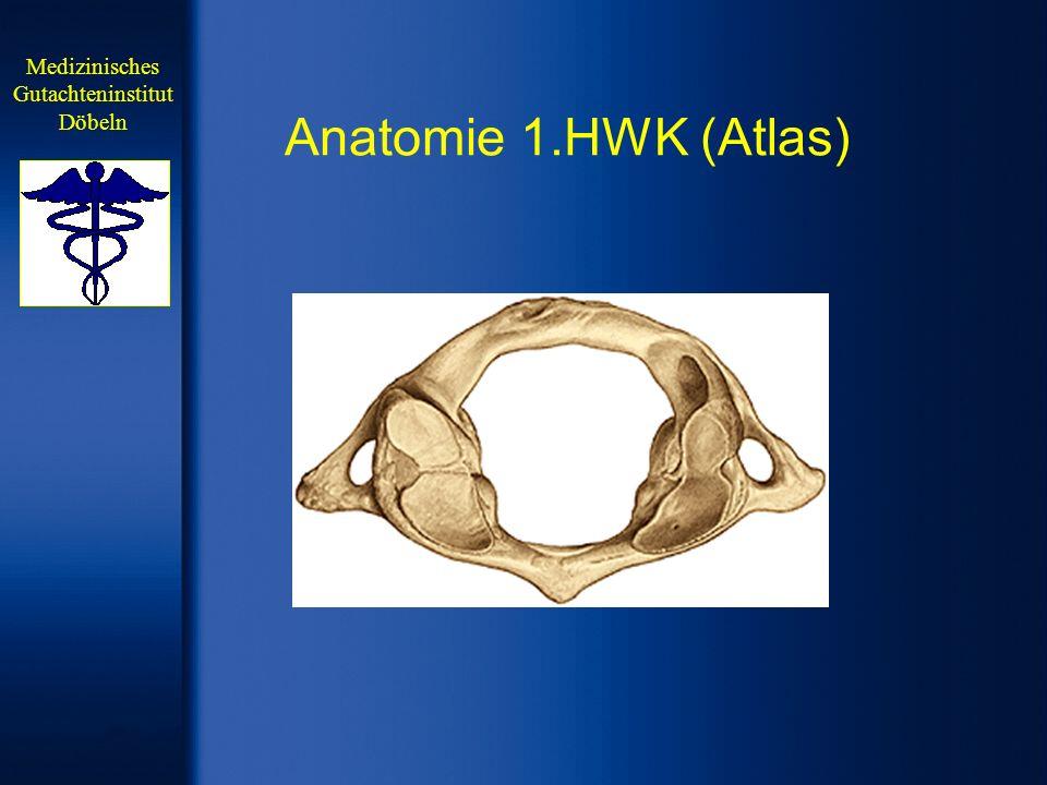 Anatomie Knöcherne und ligamentäre Verbindung 1.und 2.