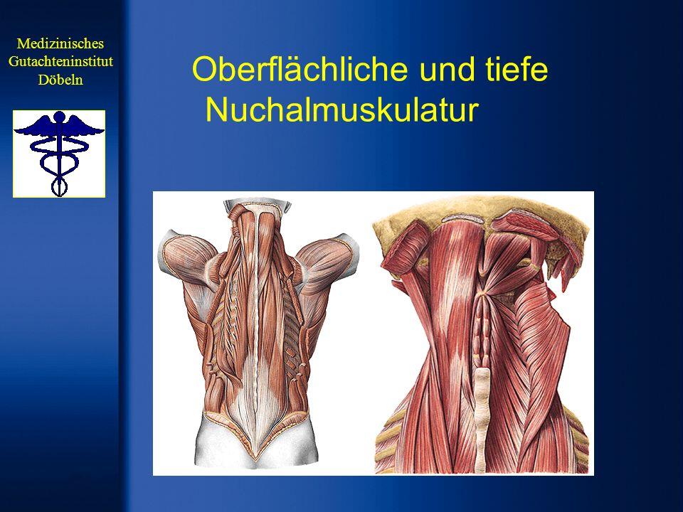 Oberflächliche und tiefe Nuchalmuskulatur Medizinisches Gutachteninstitut Döbeln