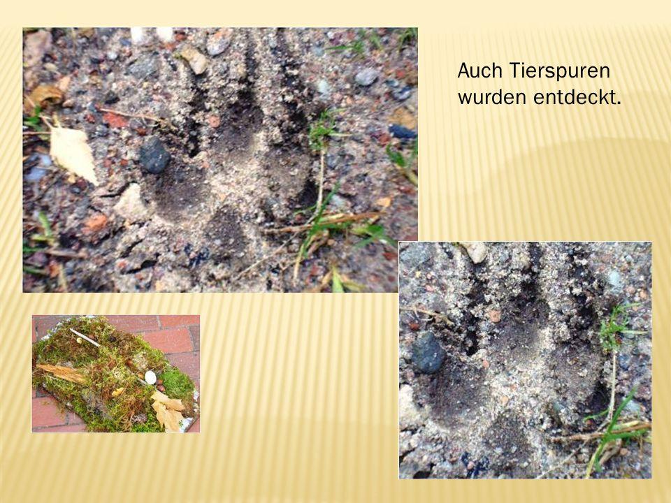 Auch Tierspuren wurden entdeckt.