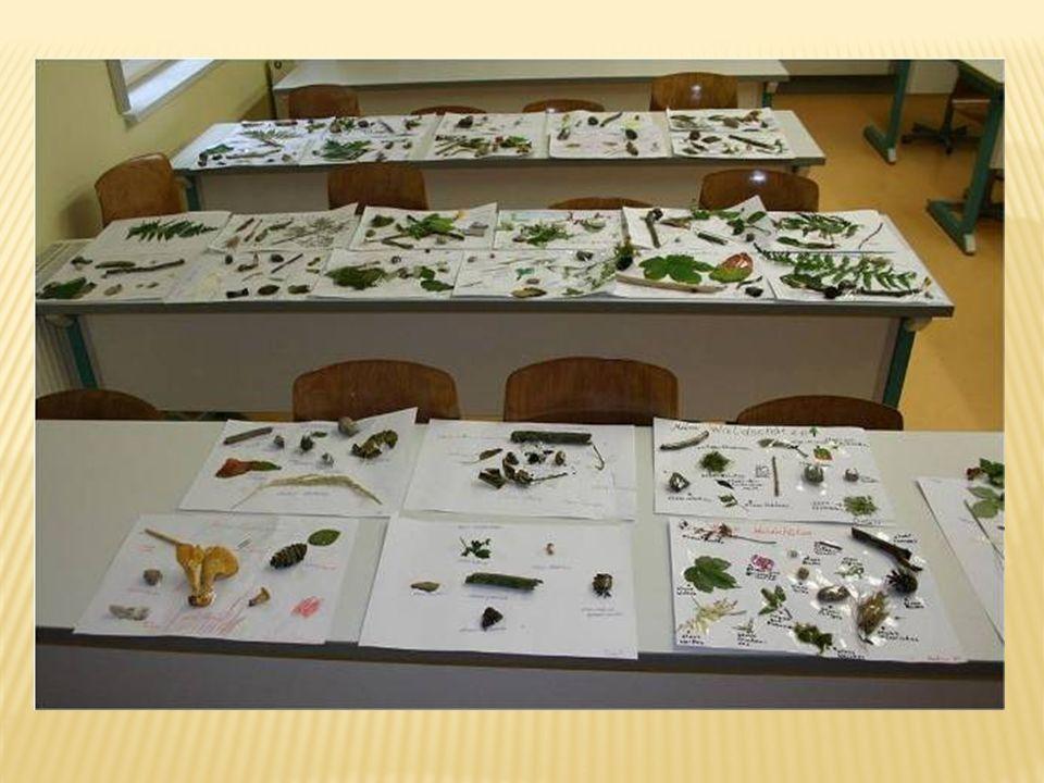 Eine Ausstellung der Waldschätze