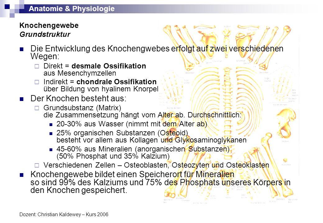 Anatomie & Physiologie Dozent: Christian Kaldewey – Kurs 2006 Im Gegensatz zum Knorpel ist der Knochen weder schneid- noch biegbar.
