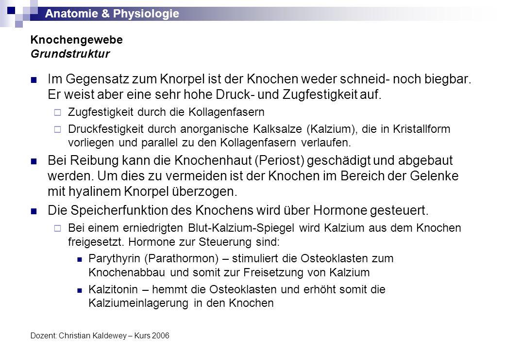 Anatomie & Physiologie Dozent: Christian Kaldewey – Kurs 2006 Im Gegensatz zum Knorpel ist der Knochen weder schneid- noch biegbar. Er weist aber eine