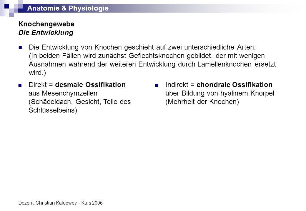 Anatomie & Physiologie Dozent: Christian Kaldewey – Kurs 2006 Die Entwicklung von Knochen geschieht auf zwei unterschiedliche Arten: (In beiden Fällen