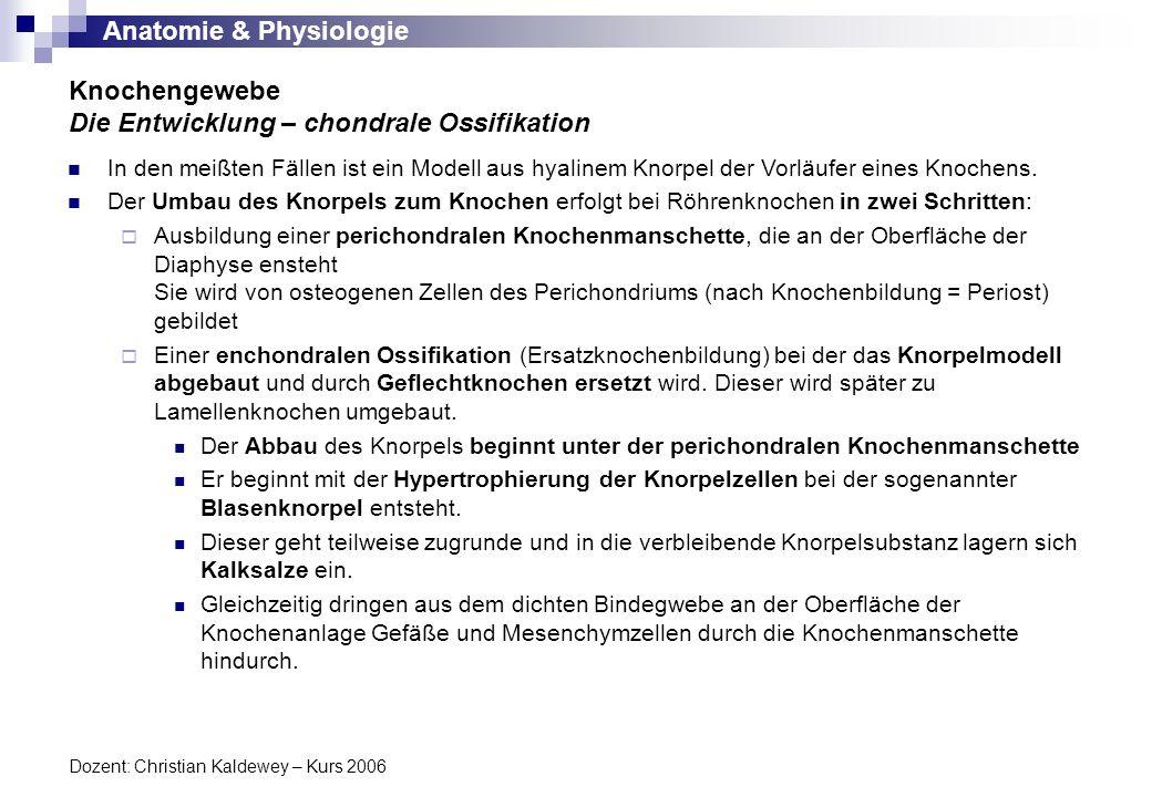 Anatomie & Physiologie Dozent: Christian Kaldewey – Kurs 2006 Knochengewebe Die Entwicklung – chondrale Ossifikation In den meißten Fällen ist ein Mod