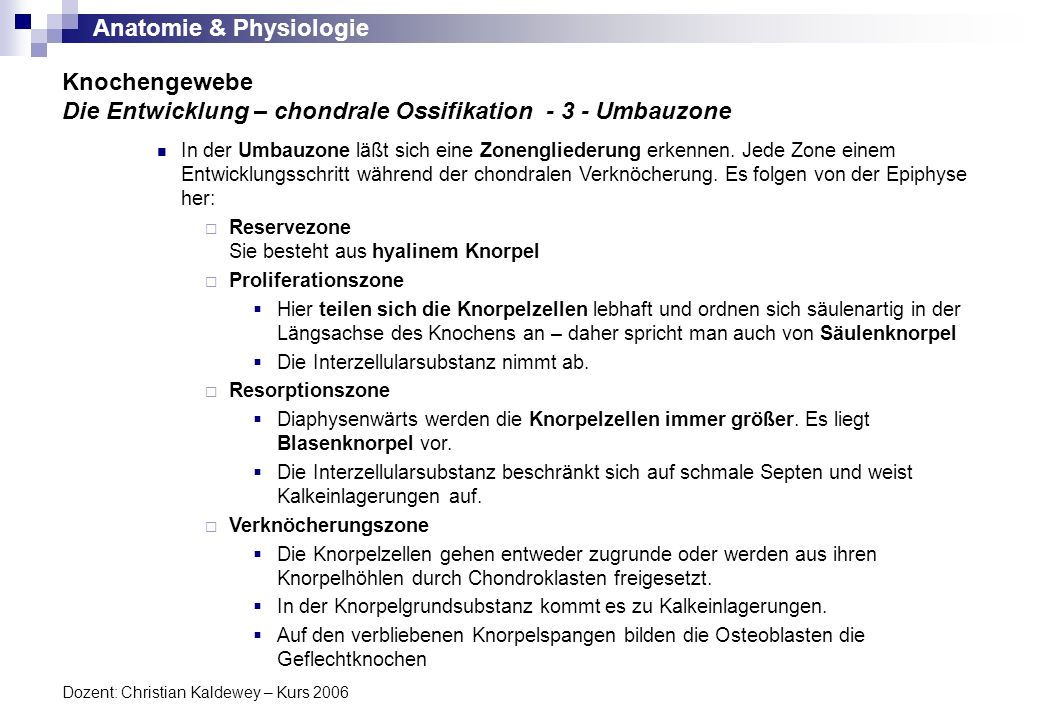 Anatomie & Physiologie Dozent: Christian Kaldewey – Kurs 2006 Knochengewebe Die Entwicklung – chondrale Ossifikation - 3 - Umbauzone In der Umbauzone