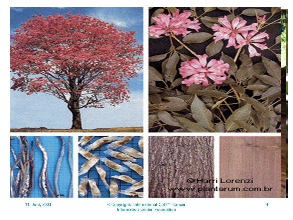 11. Juni, 2003© Copyright: International CoD Cancer Information Center Foundation 4 Der CoD-Tee: Zusammensetzung Die Heilpflanzen der Regenwaldvölker
