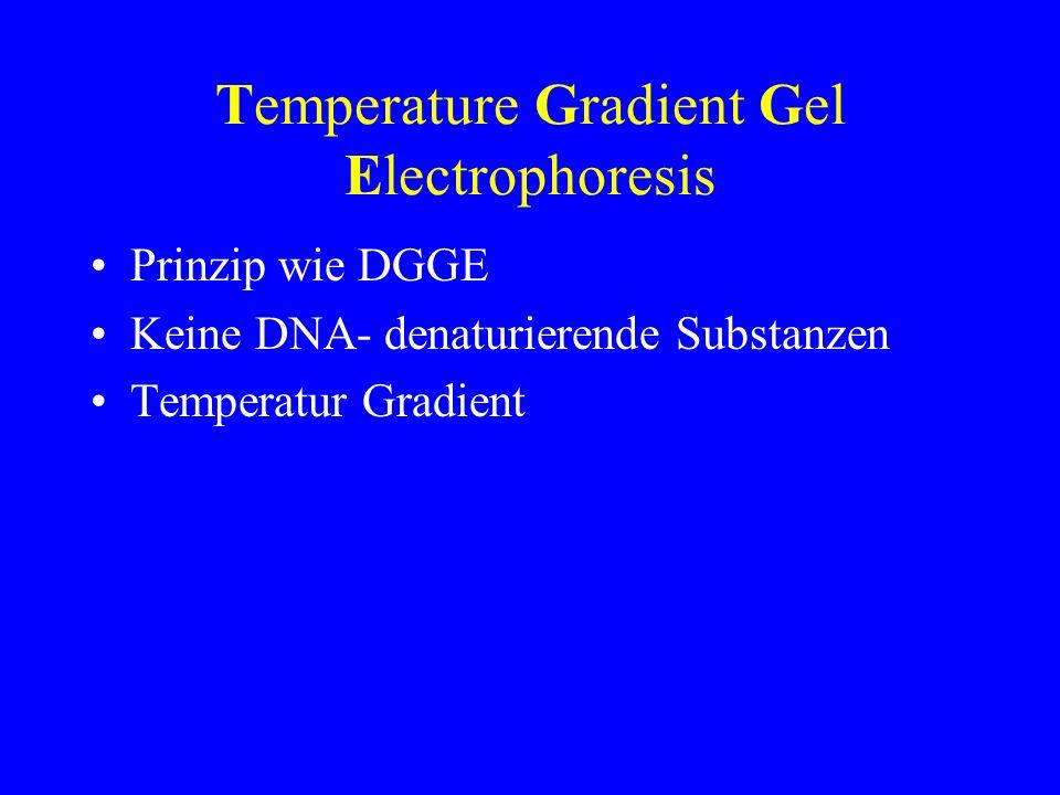 Temperature Gradient Gel Electrophoresis Prinzip wie DGGE Keine DNA- denaturierende Substanzen Temperatur Gradient