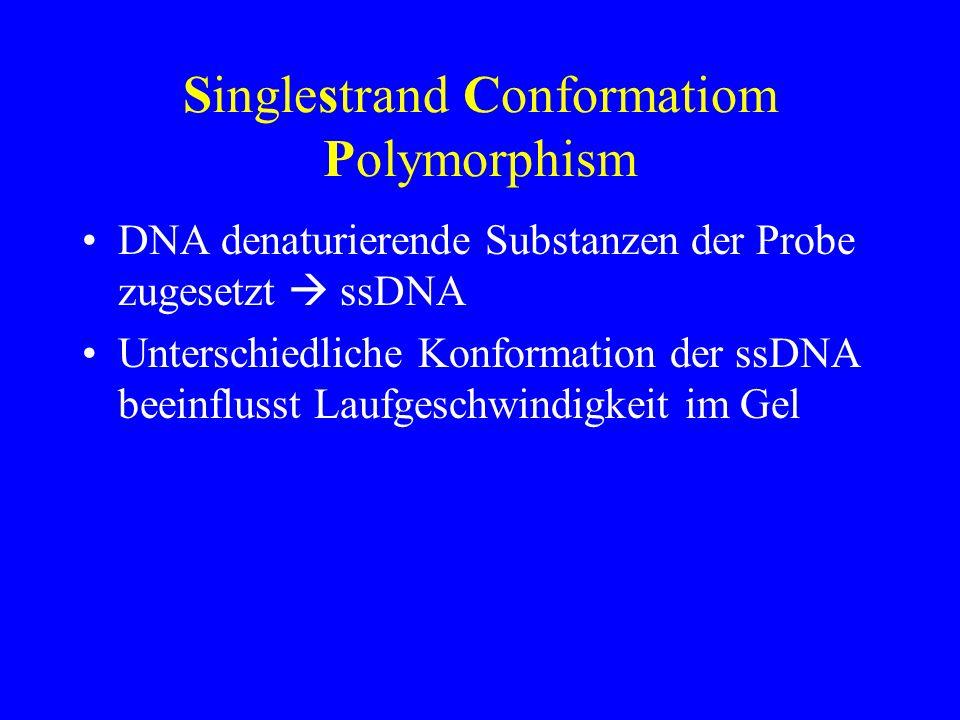 Singlestrand Conformatiom Polymorphism DNA denaturierende Substanzen der Probe zugesetzt ssDNA Unterschiedliche Konformation der ssDNA beeinflusst Lau