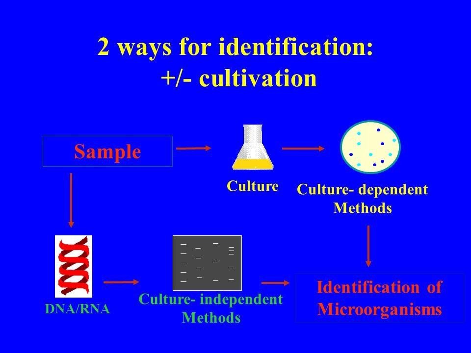 Lokalisierung der Bakterien im Blut: Fluorescents Insitu Hybridisation unspikedspiked m.