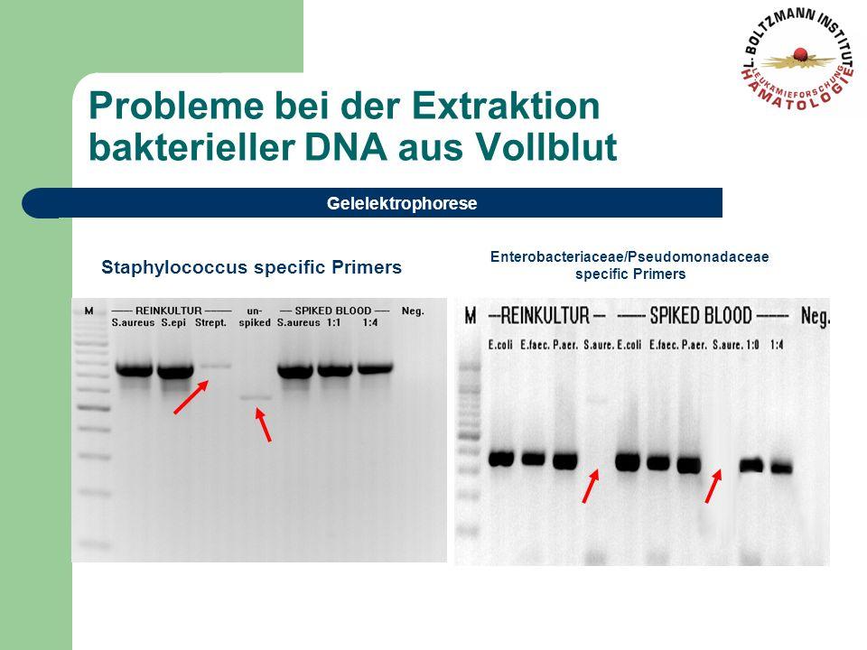 Probleme bei der Extraktion bakterieller DNA aus Vollblut Gelelektrophorese Staphylococcus specific Primers Enterobacteriaceae/Pseudomonadaceae specif
