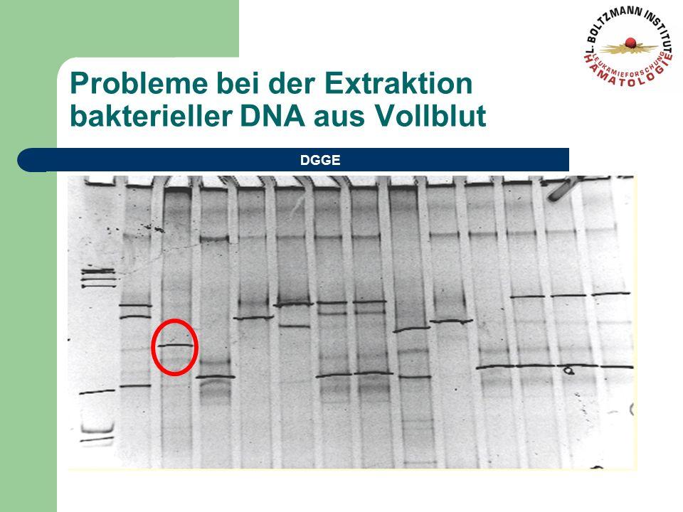 Probleme bei der Extraktion bakterieller DNA aus Vollblut DGGE