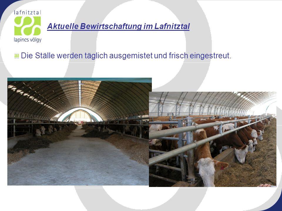 Aktuelle Bewirtschaftung im Lafnitztal Die Ställe werden täglich ausgemistet und frisch eingestreut.