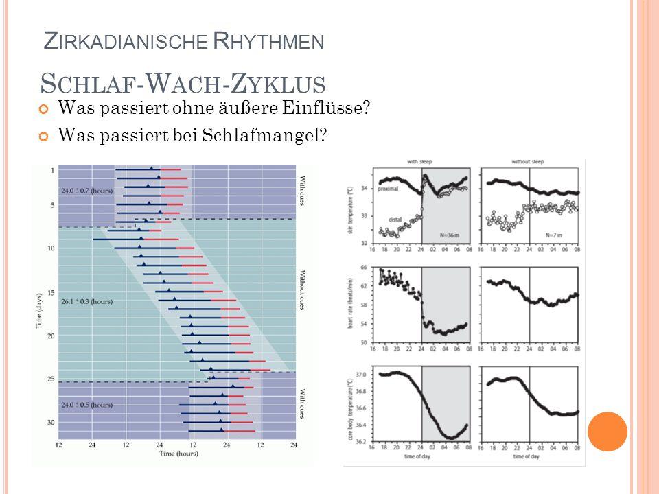 S CHLAF -W ACH -Z YKLUS Was passiert ohne äußere Einflüsse? Was passiert bei Schlafmangel? Z IRKADIANISCHE R HYTHMEN
