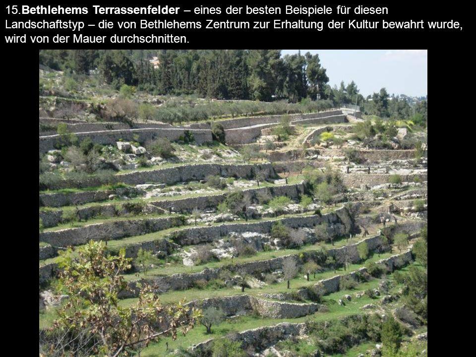 15.Bethlehems Terrassenfelder – eines der besten Beispiele für diesen Landschaftstyp – die von Bethlehems Zentrum zur Erhaltung der Kultur bewahrt wur