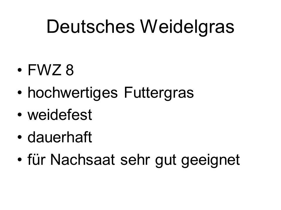 Deutsches Weidelgras FWZ 8 hochwertiges Futtergras weidefest dauerhaft für Nachsaat sehr gut geeignet