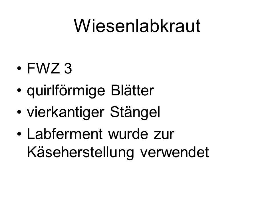 Wiesenlabkraut FWZ 3 quirlförmige Blätter vierkantiger Stängel Labferment wurde zur Käseherstellung verwendet