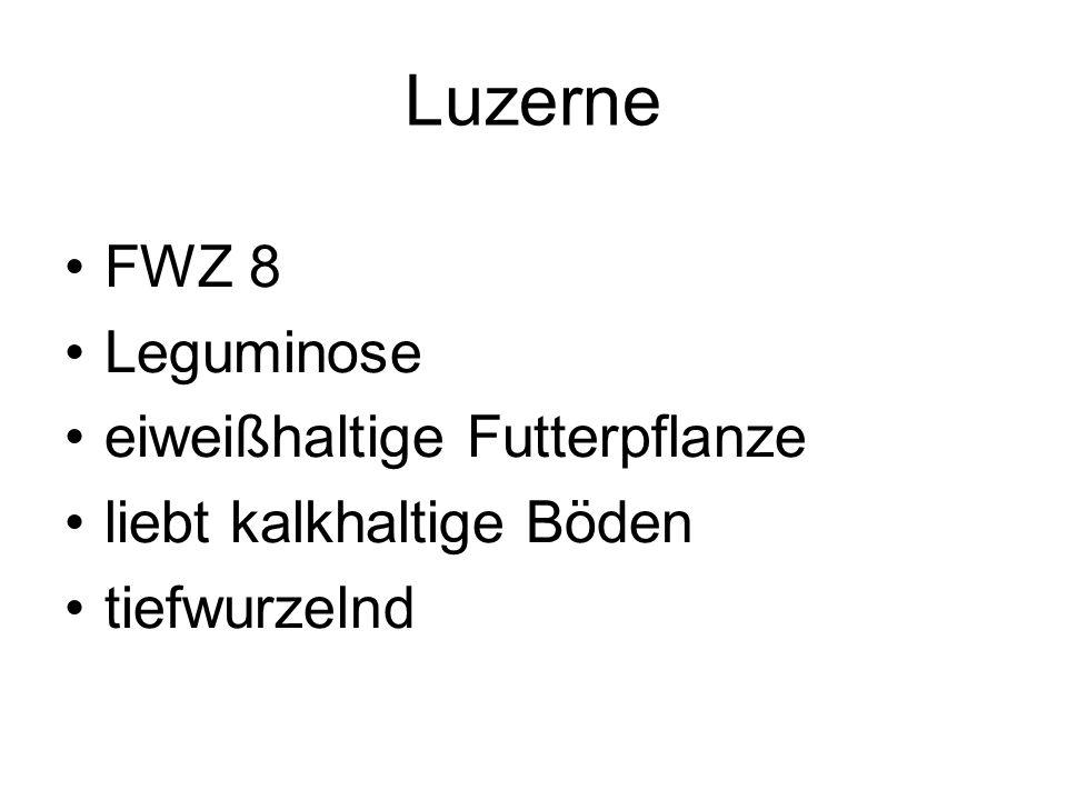 Luzerne FWZ 8 Leguminose eiweißhaltige Futterpflanze liebt kalkhaltige Böden tiefwurzelnd