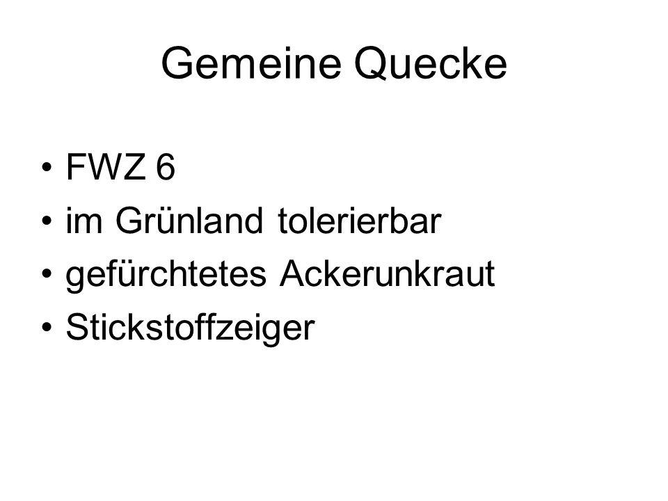 Gemeine Quecke FWZ 6 im Grünland tolerierbar gefürchtetes Ackerunkraut Stickstoffzeiger