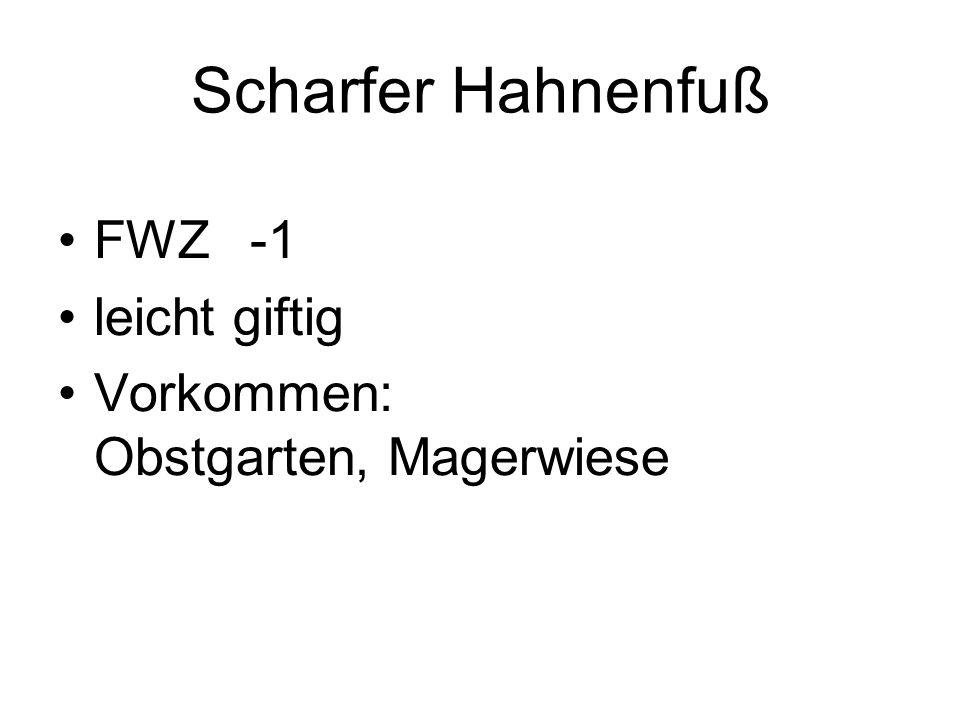 Scharfer Hahnenfuß FWZ -1 leicht giftig Vorkommen: Obstgarten, Magerwiese