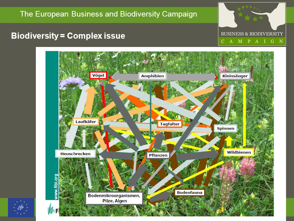 The European Business and Biodiversity Campaign Biodiversity = Complex issue