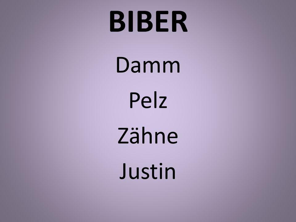 BIBER Damm Pelz Zähne Justin