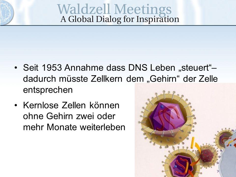 Seit 1953 Annahme dass DNS Leben steuert– dadurch müsste Zellkern dem Gehirn der Zelle entsprechen Kernlose Zellen können ohne Gehirn zwei oder mehr M