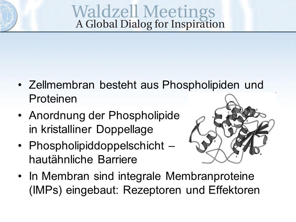 Zellmembran besteht aus Phospholipiden und Proteinen Anordnung der Phospholipide in kristalliner Doppellage Phospholipiddoppelschicht – hautähnliche B