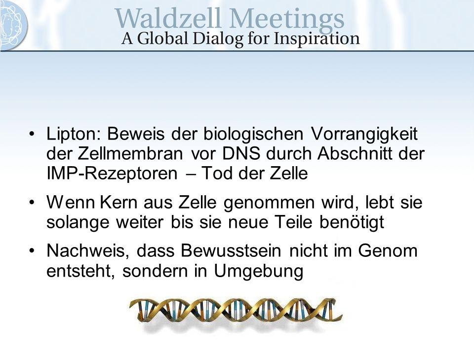 Lipton: Beweis der biologischen Vorrangigkeit der Zellmembran vor DNS durch Abschnitt der IMP-Rezeptoren – Tod der Zelle Wenn Kern aus Zelle genommen