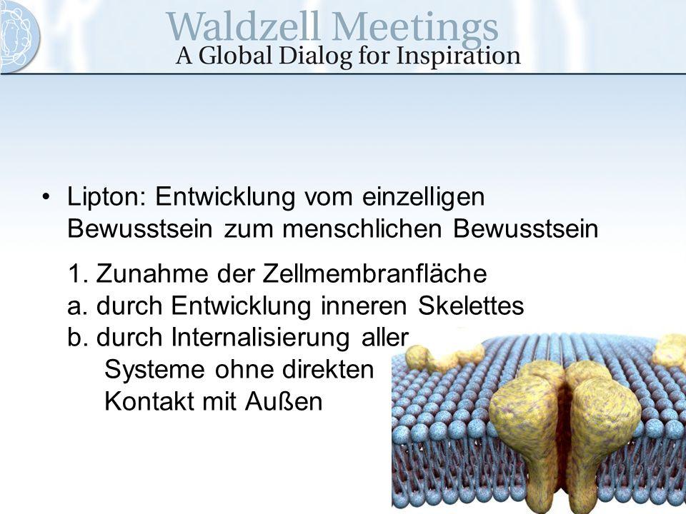 Lipton: Entwicklung vom einzelligen Bewusstsein zum menschlichen Bewusstsein 1. Zunahme der Zellmembranfläche a. durch Entwicklung inneren Skelettes b