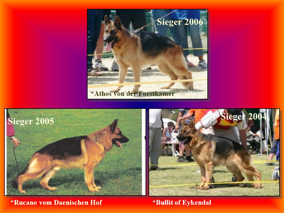 Sieger 2004 Sieger 2005 Sieger 2006 *Bullit of Eykendal*Rucano vom Daenischen Hof *Athos von der Forstkamer