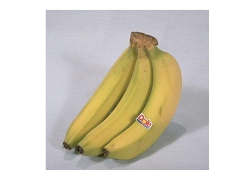 Obst die Äpfelapples die Birnenpears die Orangenoranges die Bananenbananas die Erdbeerenstrawberries die Himbeerenraspberries die Zitronenlemons die Pfirsichepeaches