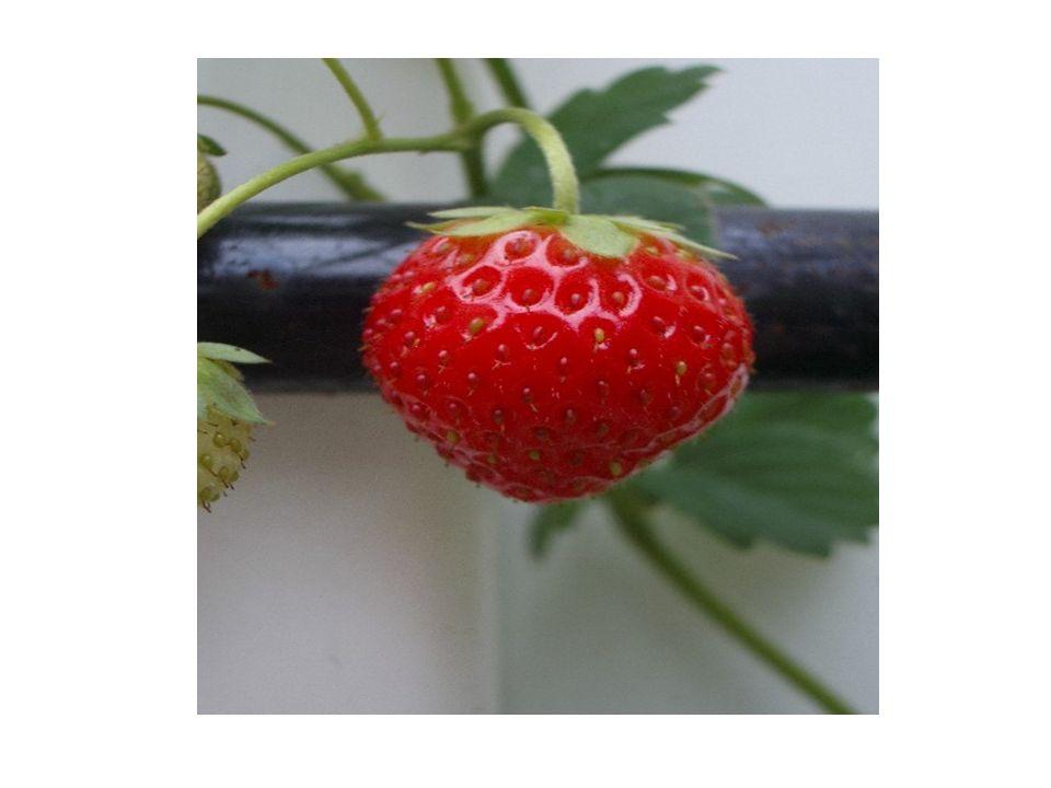 Mehr Gemüsesorten die Tomatetomato die Ghurkecucumber der Salatlettuce das Paprikapepper der Spinatspinach die Zucchinicourgette