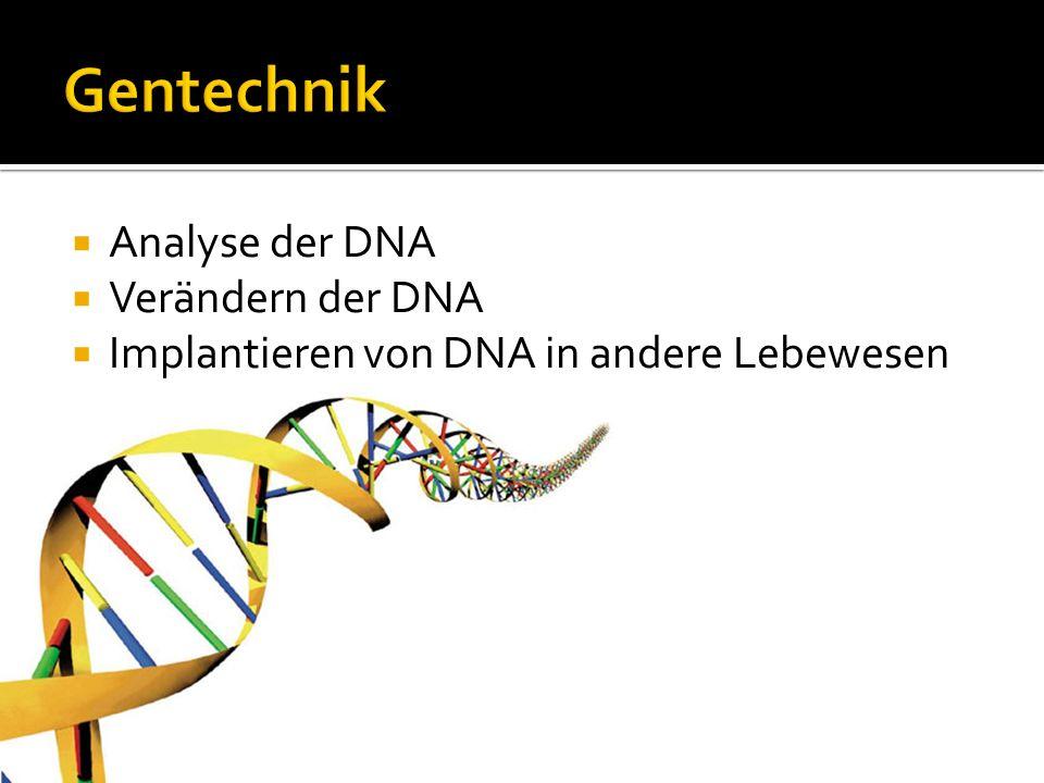Analyse der DNA Verändern der DNA Implantieren von DNA in andere Lebewesen