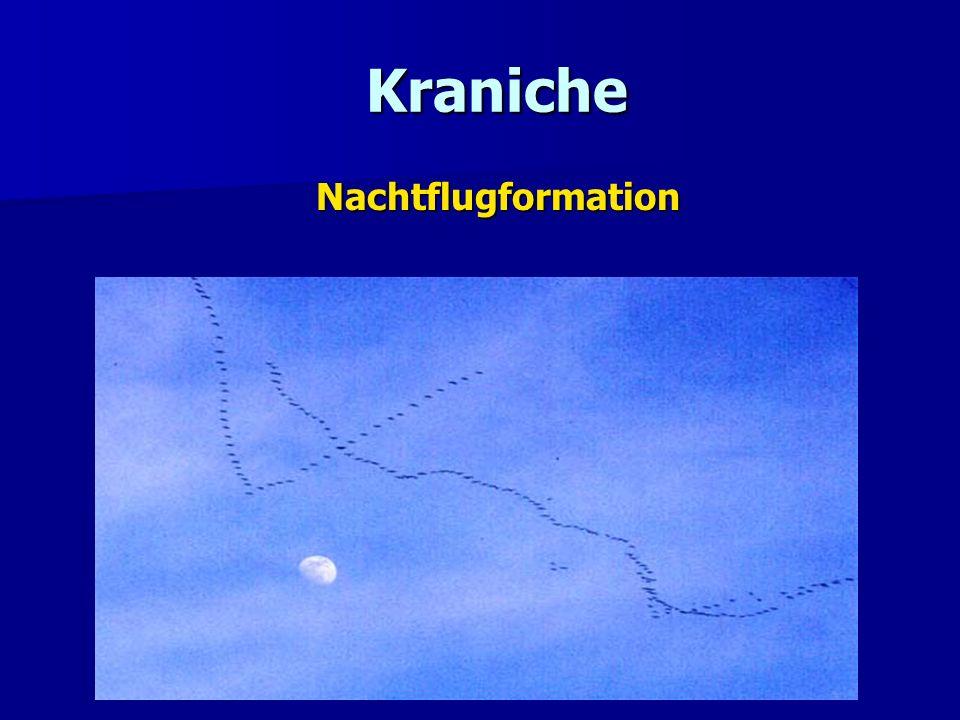 Kraniche Kraniche Nachtflugformation