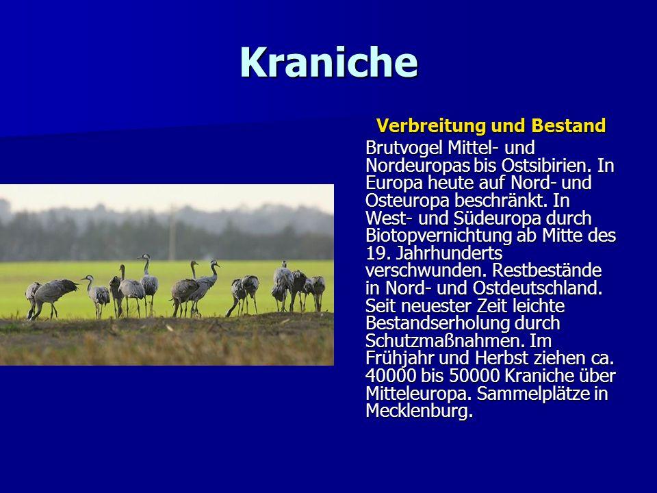 Kraniche Verbreitung und Bestand Brutvogel Mittel- und Nordeuropas bis Ostsibirien. In Europa heute auf Nord- und Osteuropa beschränkt. In West- und S