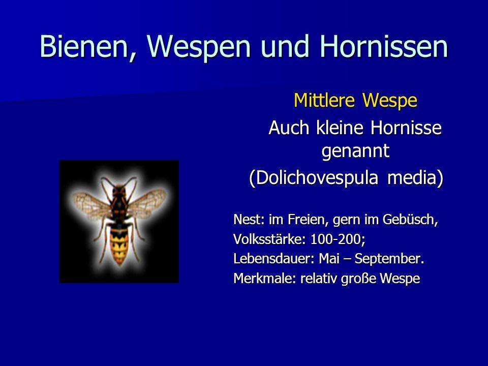 Bienen, Wespen und Hornissen Mittlere Wespe Auch kleine Hornisse genannt (Dolichovespula media) Nest: im Freien, gern im Gebüsch, Volksstärke: 100-200