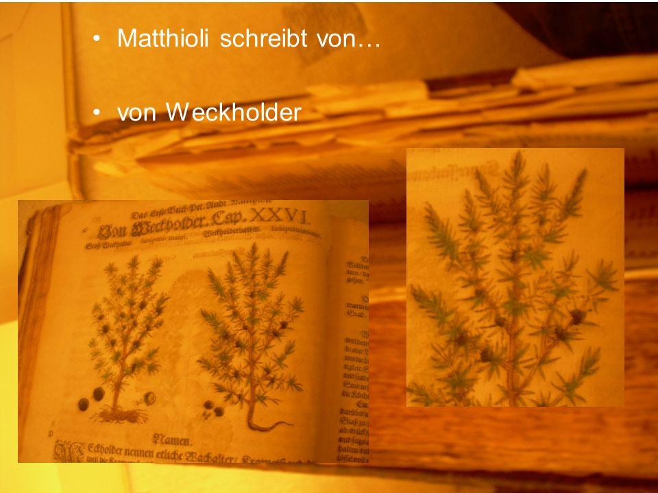 Matthioli schreibt von… von Weckholder