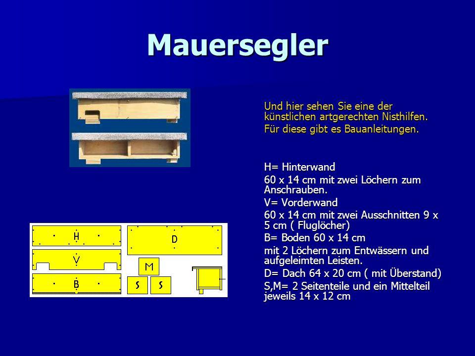 Mauersegler Und hier sehen Sie eine der künstlichen artgerechten Nisthilfen. Für diese gibt es Bauanleitungen. H= Hinterwand 60 x 14 cm mit zwei Löche