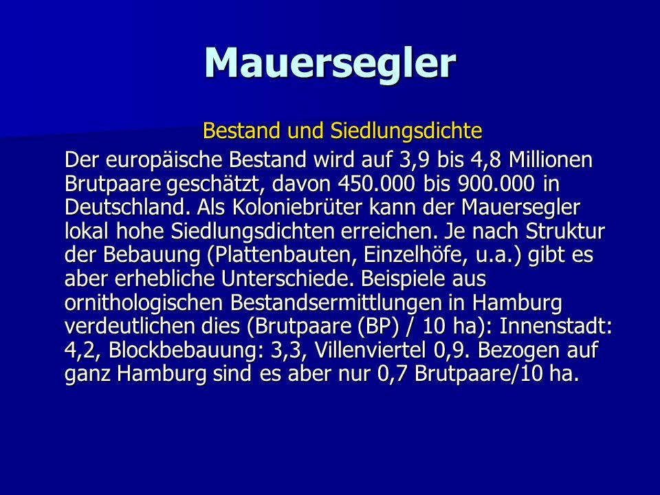 Mauersegler Bestand und Siedlungsdichte Der europäische Bestand wird auf 3,9 bis 4,8 Millionen Brutpaare geschätzt, davon 450.000 bis 900.000 in Deuts