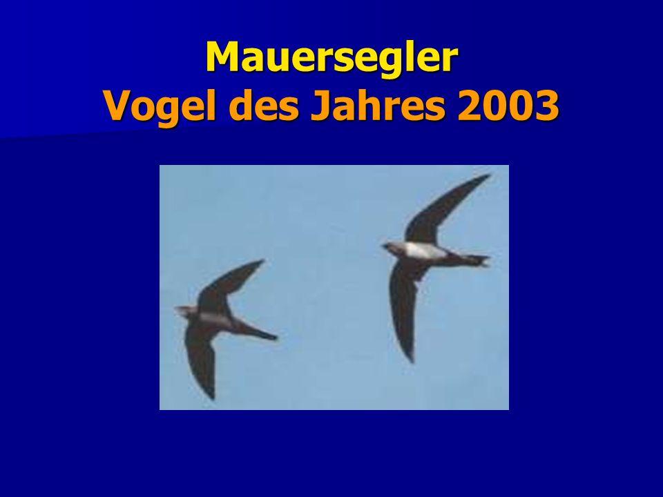 Mauersegler Bestand und Siedlungsdichte Der europäische Bestand wird auf 3,9 bis 4,8 Millionen Brutpaare geschätzt, davon 450.000 bis 900.000 in Deutschland.
