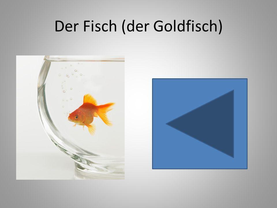 Der Fisch (der Goldfisch)