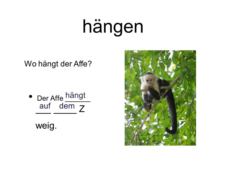 hängen Der Affe Z weig. hängt auf dem Wo hängt der Affe?