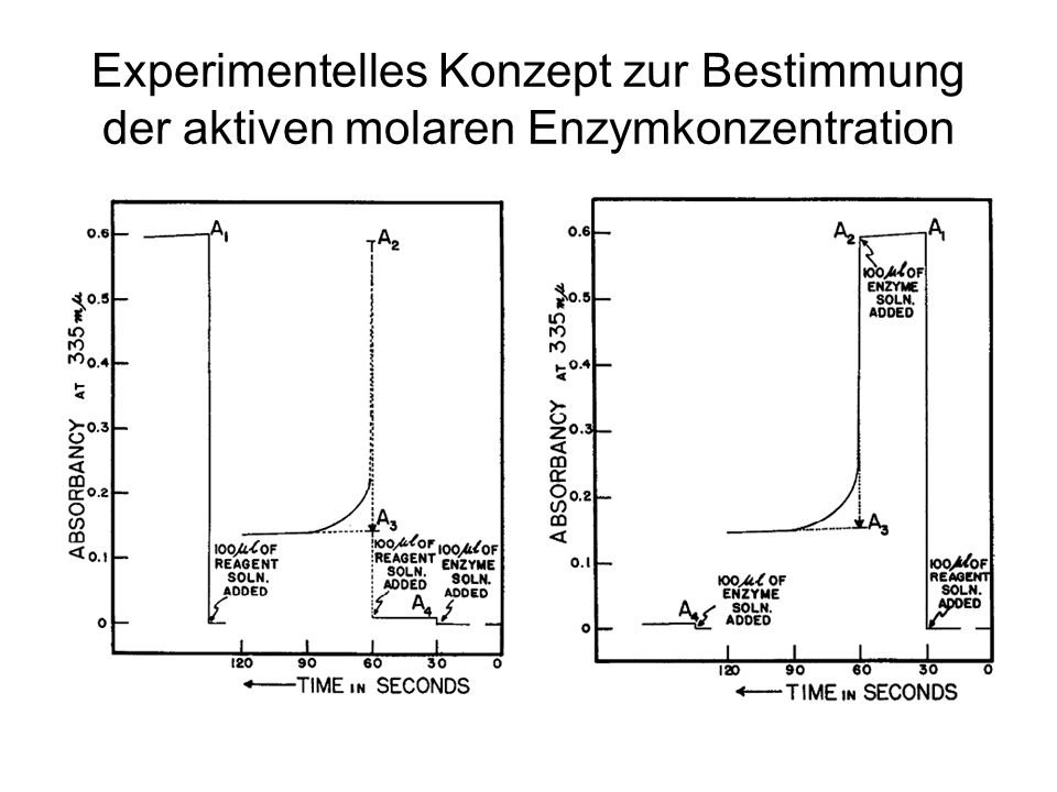 Experimentelles Konzept zur Bestimmung der aktiven molaren Enzymkonzentration