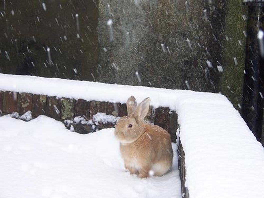 Schnee ist immer weiß.